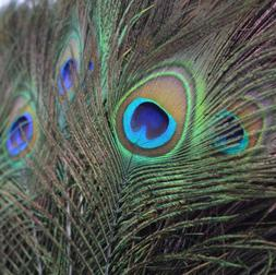 10pcs Real Natural Peacock Tail Eyes Feathers Wedding Festiv