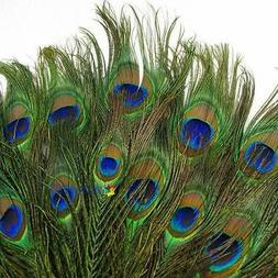 20pcs Real Natural Peacock Tail Eyes Feathers 8-12 Inches /