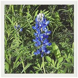 3dRose Bluebonnet - Greeting Cards, 6 x 6 inches, set of 12
