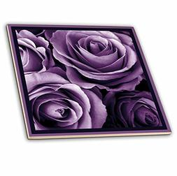 3dRose ct_29807_4 Close Up of Dreamy Lavender Purple Rose Bo