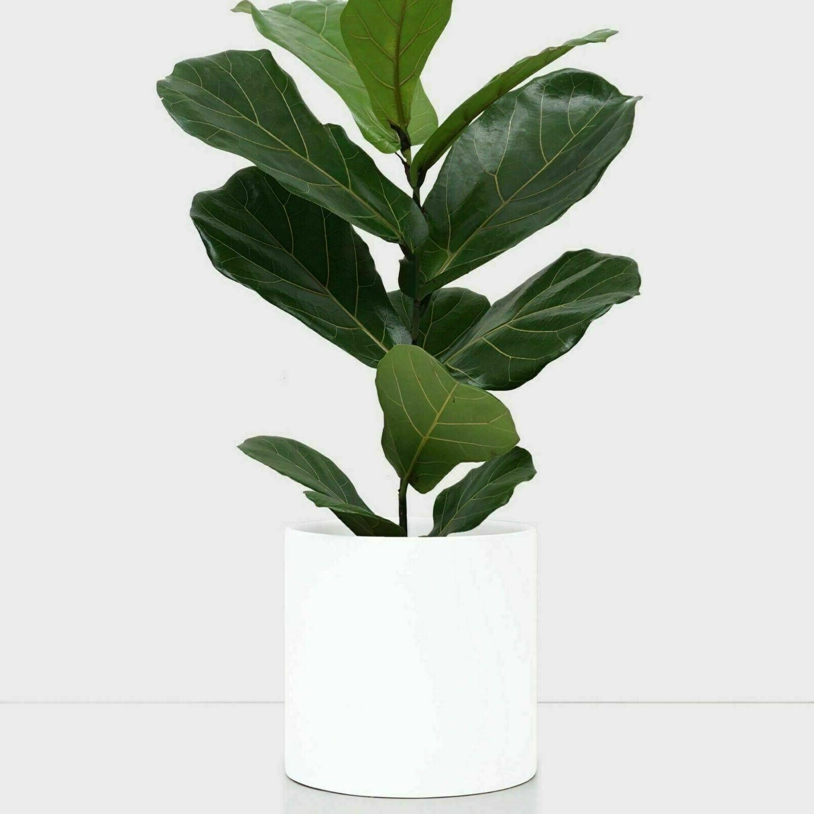 White Ceramic Plant Pot Cylinder Planter Indoor/Outdoor 5